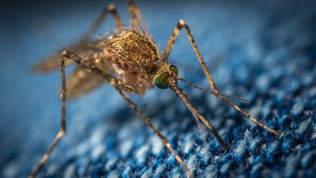 Tips to prevent mosquito-borne disease